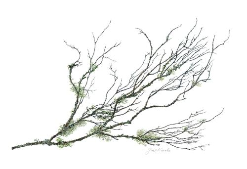 Gail-branch